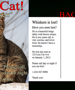 free find lost cat  the 1 lost & found cat website in america lost cat template flyer doc
