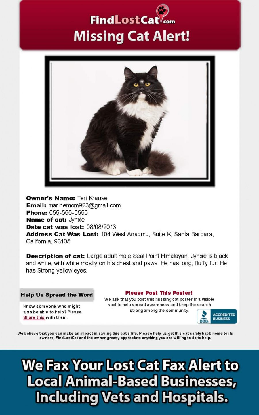 free find lost cat  the 1 lost & found cat website in america lost cat template flyer