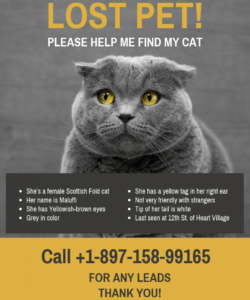 yellow black missing cat poster template lost cat template flyer doc