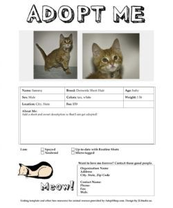 adoption listing templates adopt a pet flyer template doc
