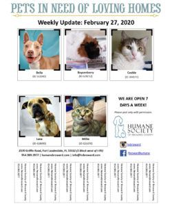 weekly pet flyer february 27 2020  humane society of adopt a pet flyer template pdf