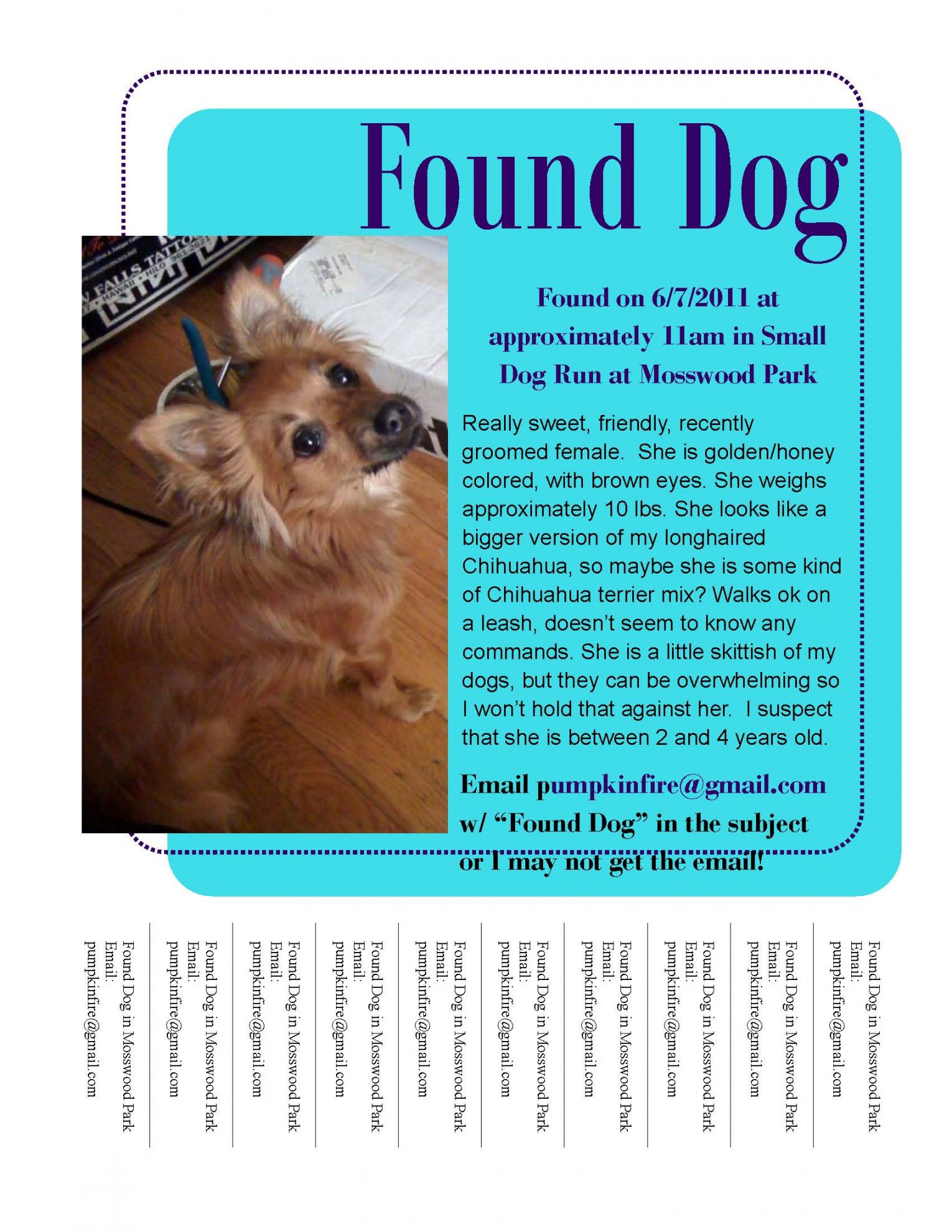 free found dog  lounge lassies' world found dog flyer template