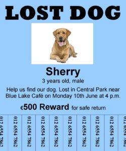 free reading a lost dog a2  educateninja found dog flyer template