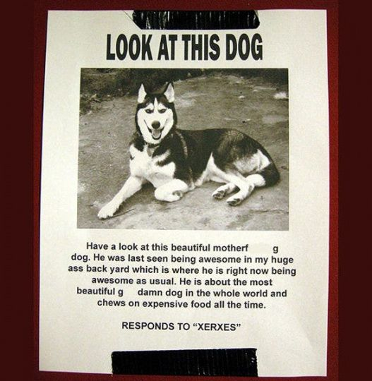 Best Missing Pet Flyer Template Doc Example