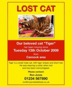 Editable Missing Pet Flyer Template