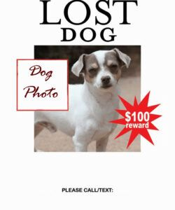 Free Missing Pet Flyer Template Doc Sample